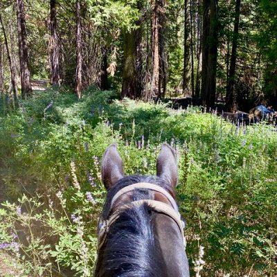 Yosemite Horseback Riding – Writing Horseback